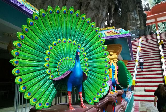バトゥ洞窟の孔雀