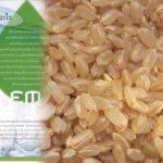 【自作】玄米による天然EM菌の作り方【無料】