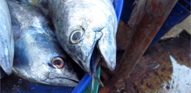 魚を呑んだ魚