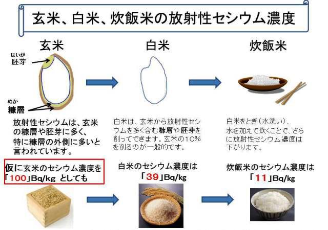 玄米、白米のセシウム濃度