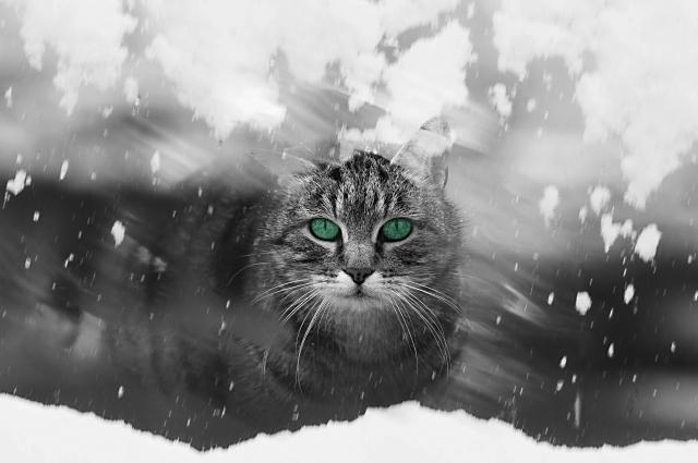 猫の皮膚病の備忘録 02